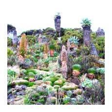Тварини і рослини африки