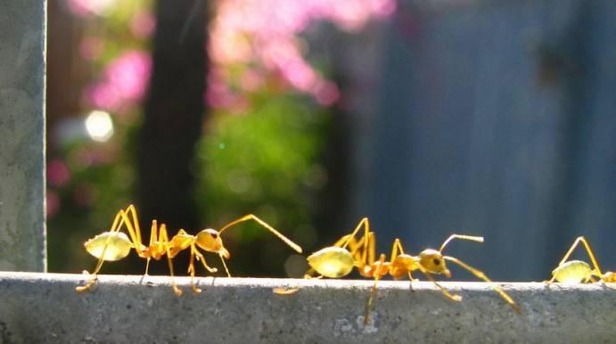 Интересные факты про муравьев для детей