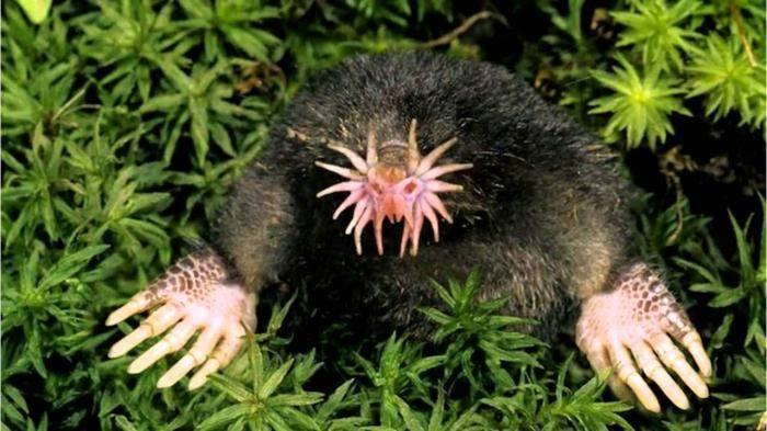 Какое самое страшное животное в мире