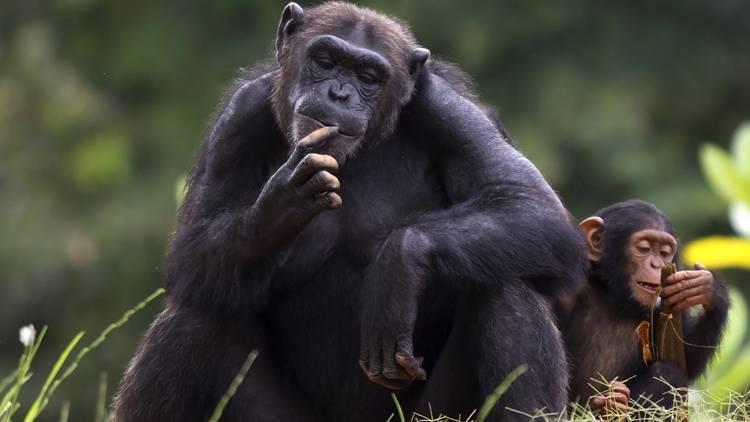Топ самых умных животных в мире