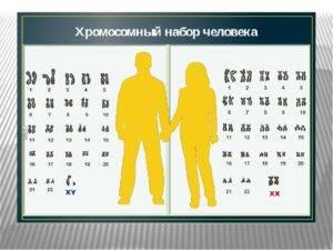 Пары хромосом
