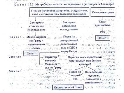 Фагоцитоз строение и функции