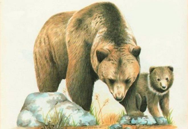 Картинки зверей для детей нарисованные цветные
