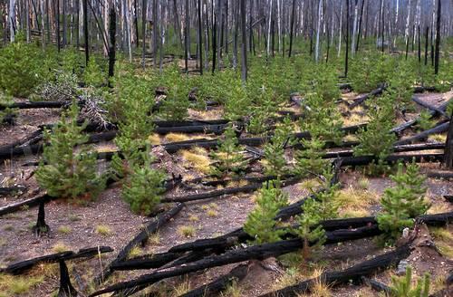 Причины возникновения природных пожаров