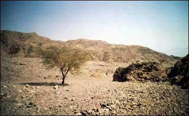 Почвы пустынь и полупустынь
