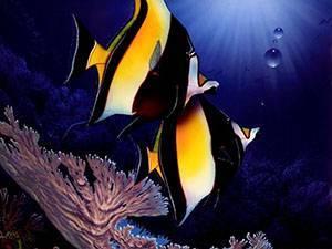 Рыбы класс животных
