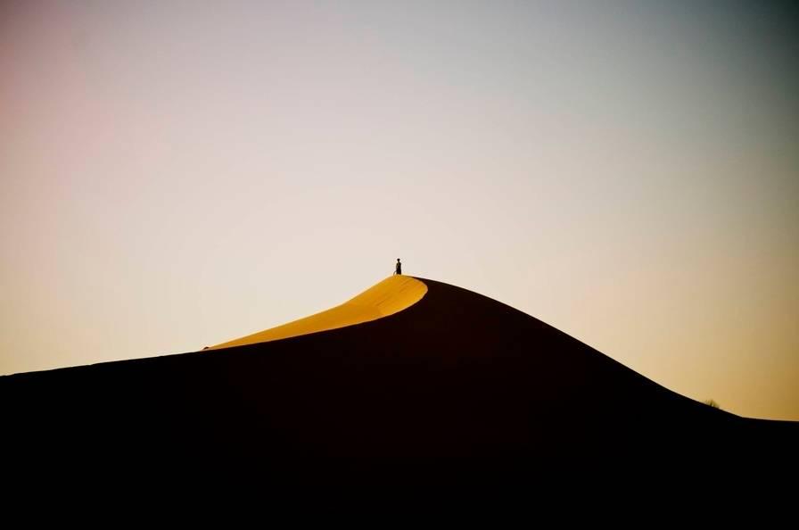 Животный мир пустыни сахара