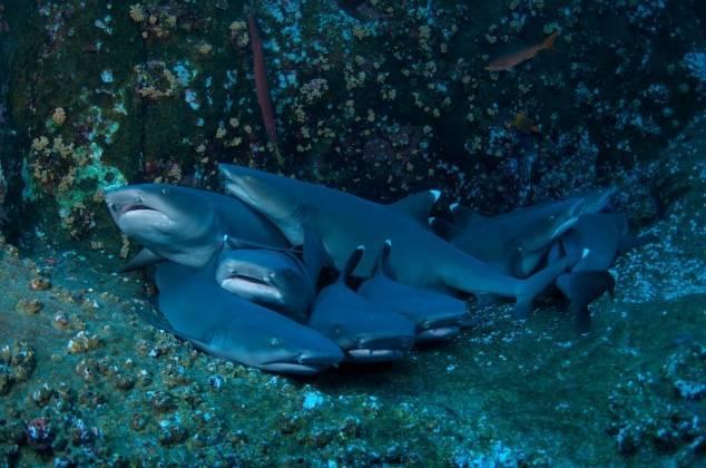 Как дышит акула
