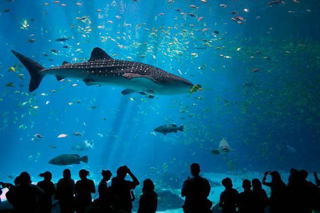 Акула относится к млекопитающим