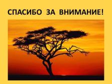 Растительность саванны африки