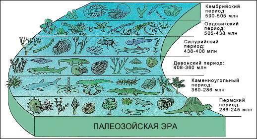 Палеозойская эра флора и фауна