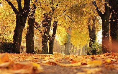 Сочинение краски осеннего леса