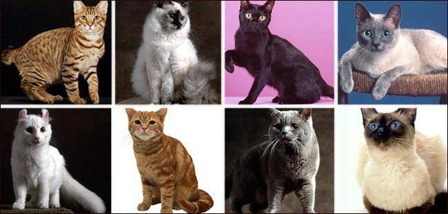 Необычные факты о кошках