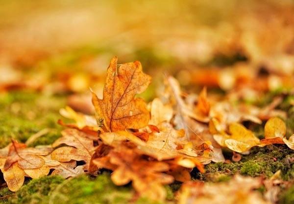 Сочинение на тему я люблю осень
