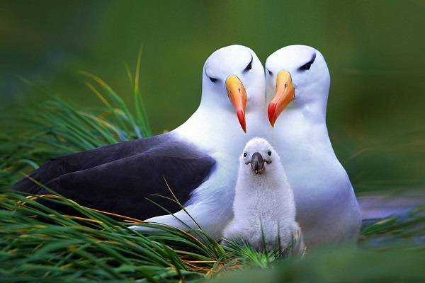 Птицы относятся к животным или нет