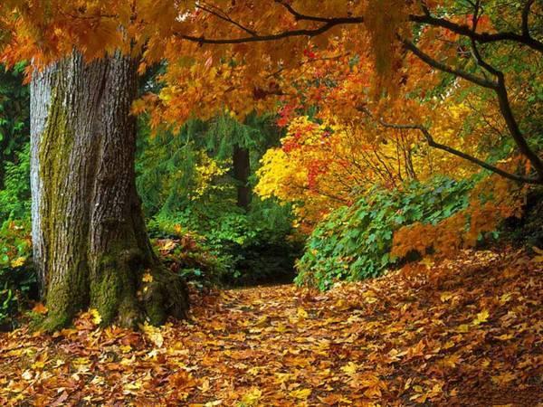 Почему листья меняют окраску осенью