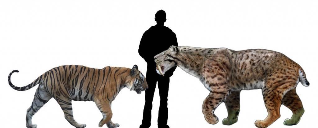 Как выглядит саблезубый тигр