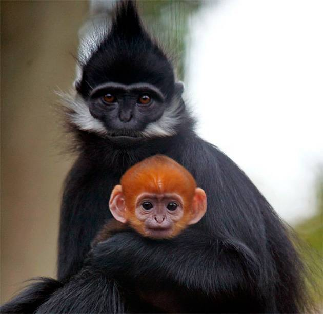Систематика обезьяны