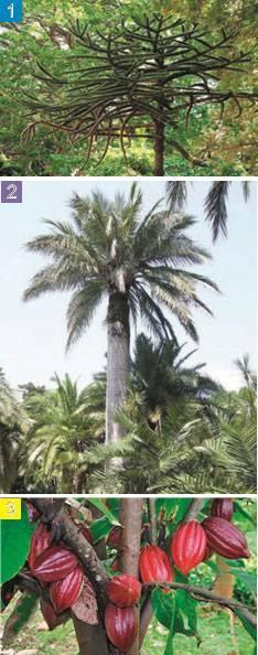 Растения экваториальных лесов южной америки