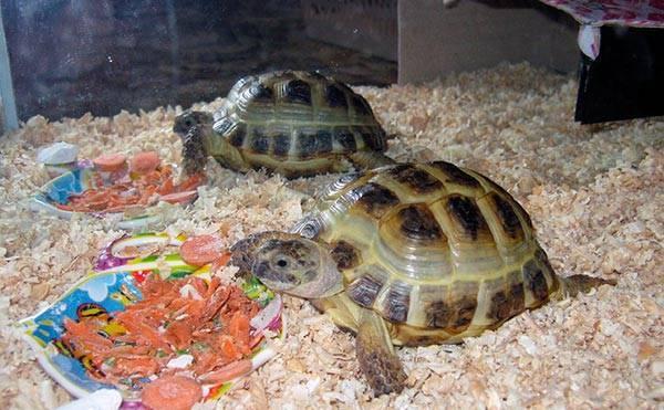 Средняя продолжительность жизни черепахи