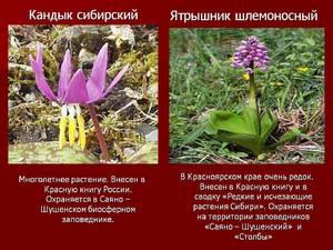 Перечень растений занесенных в красную книгу