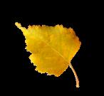 Отговорила осень золотая есенин текст