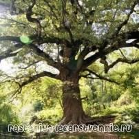 Растения и животные лесных зон