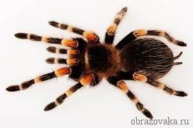 Сколько видов пауков существует