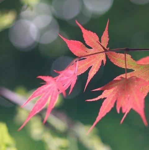Сочинение конец осени