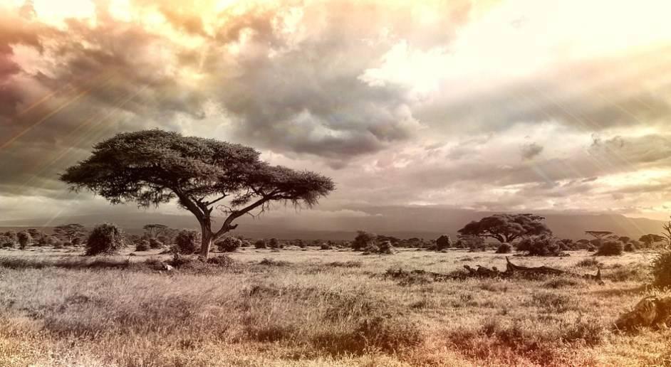 Цікаві факти про материк африка