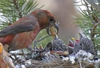 Кочующие птицы список