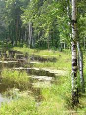 Сочинение на тему природа летом
