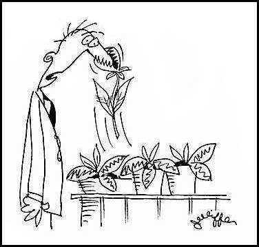 Растения которые питаются животными