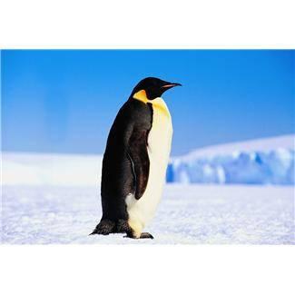 Породы пингвинов