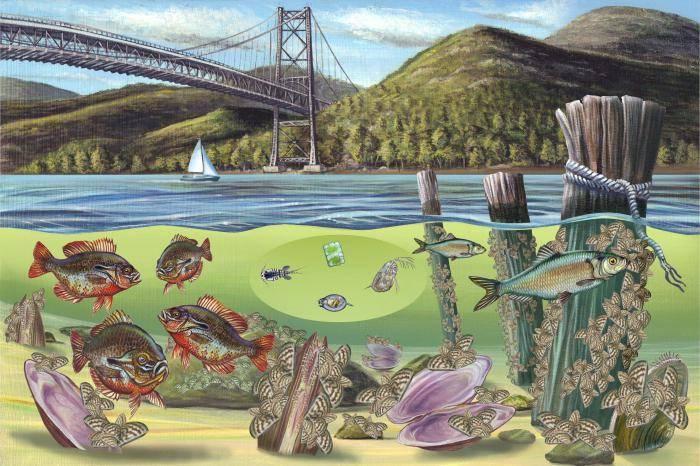 Каковы существенные признаки экосистемы