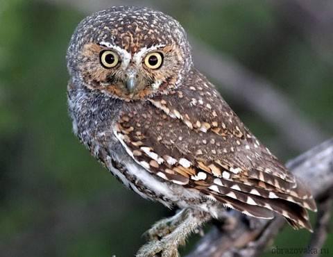 Птицы южной америки фото с названиями