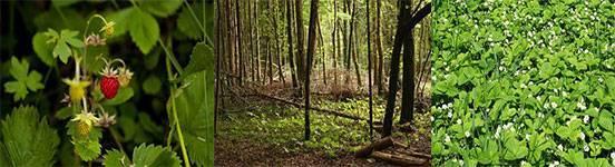 Описание леса летом