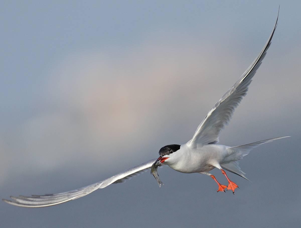 Отлет птиц осенью картинки