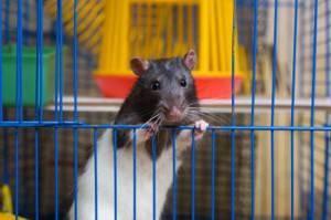 Клетки для крыс фото