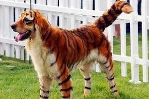 Назовите известные вам породы собак