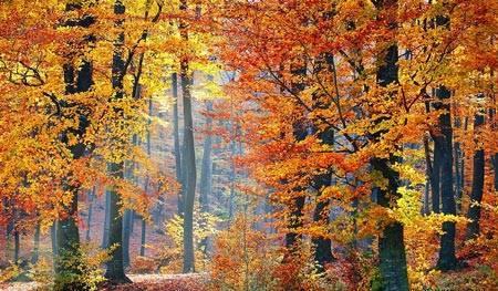 Сочинение миниатюра поздняя осень
