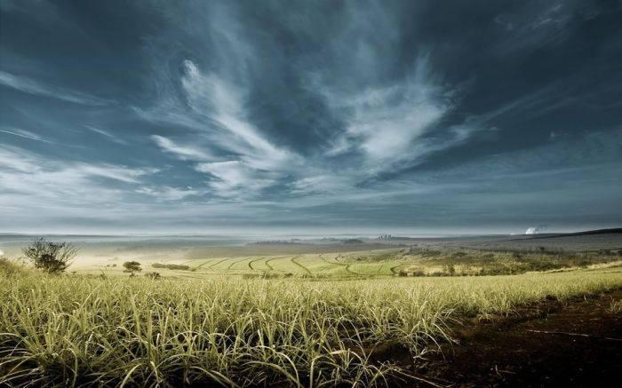 Какие почвы самые плодородные