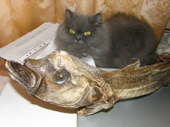 Рыба похожая на человека