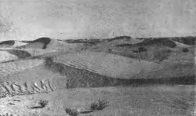 Характеристика природной зоны пустыни и полупустыни