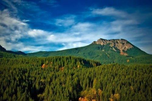 Экологические проблемы лесных ресурсов