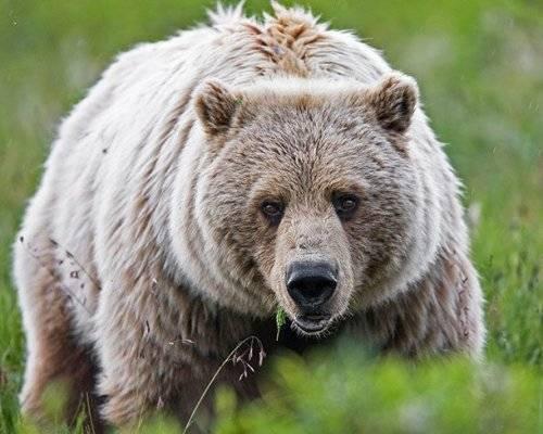 Самые страшные и опасные животные в мире