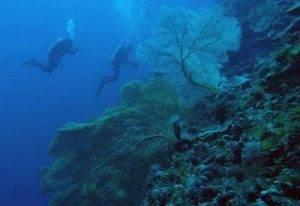 Почему жители австралии охраняют большой барьерный риф