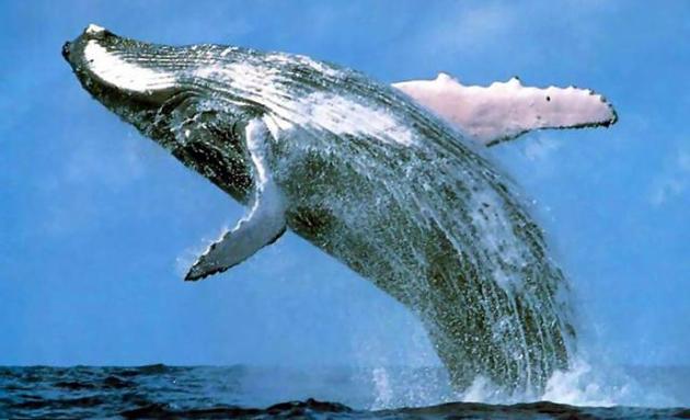 Самое большое животное существовавшее на земле