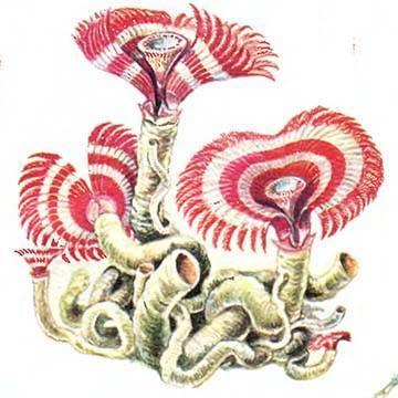 Систематика кольчатых червей