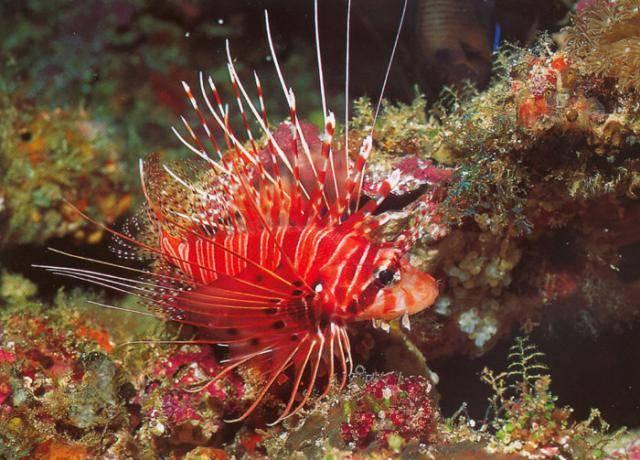 Какие животные обитают в коралловых рифах
